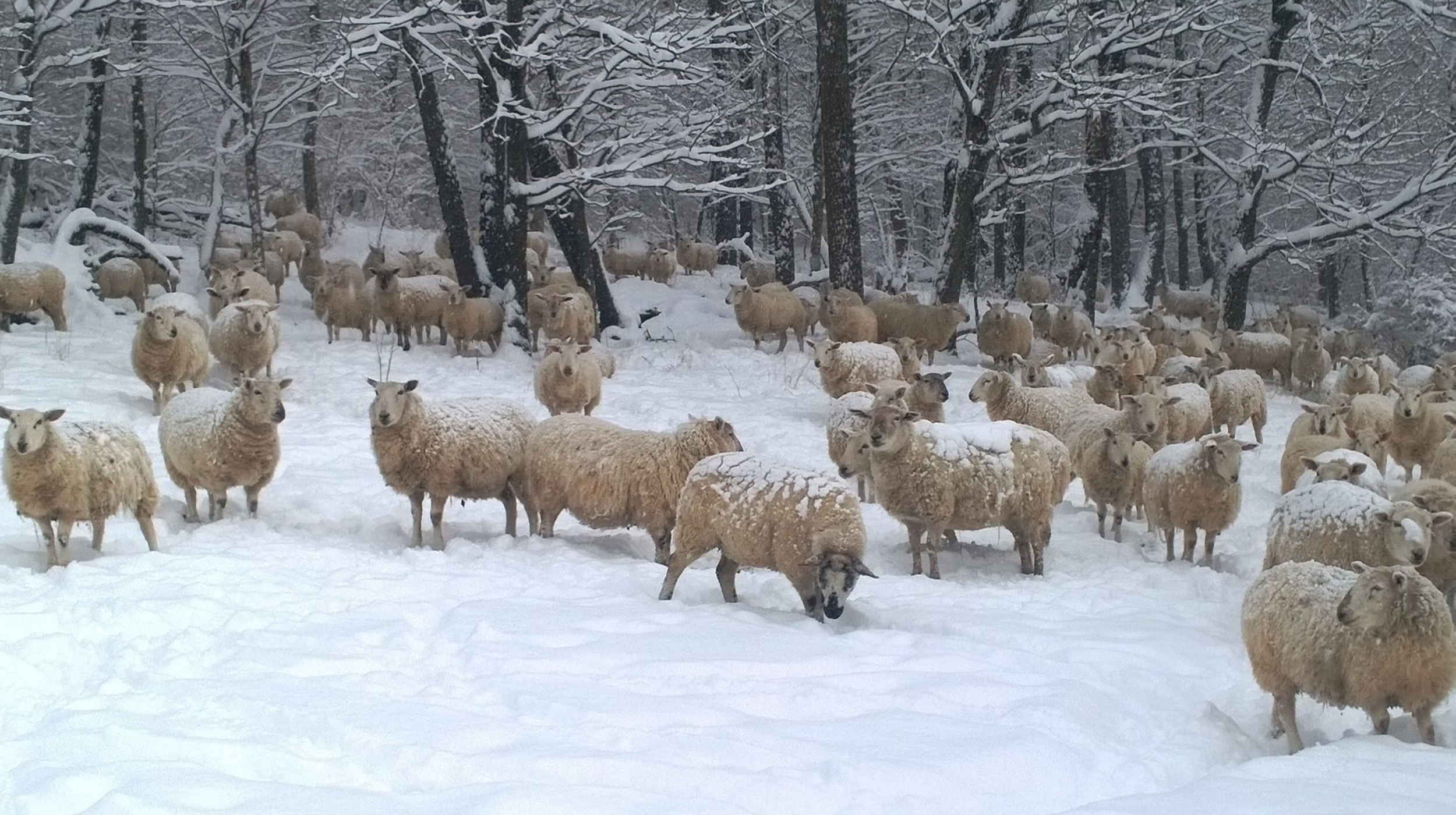 winter flock